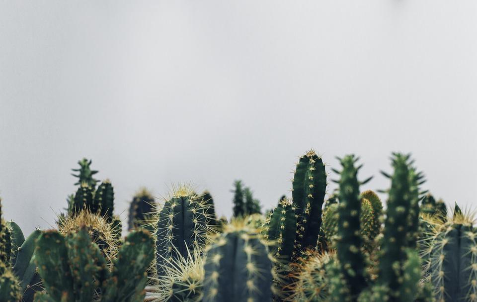 cacti-1834749_960_720